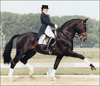 """Résultat de recherche d'images pour """"dressage equitation"""""""
