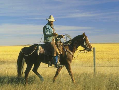 comment apprendre le western a un cheval. Black Bedroom Furniture Sets. Home Design Ideas