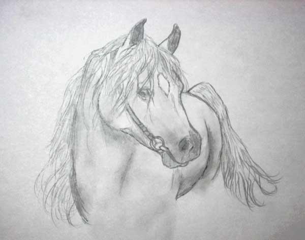 Pin cheval arabe photos show on pinterest - Comment dessiner un poney ...
