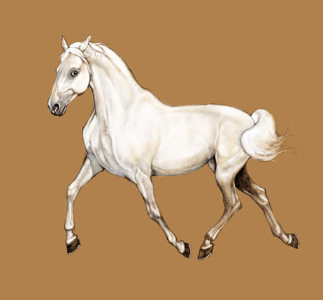 Le site cheval galeries photos membres du site cheval - Cheval dessin couleur ...