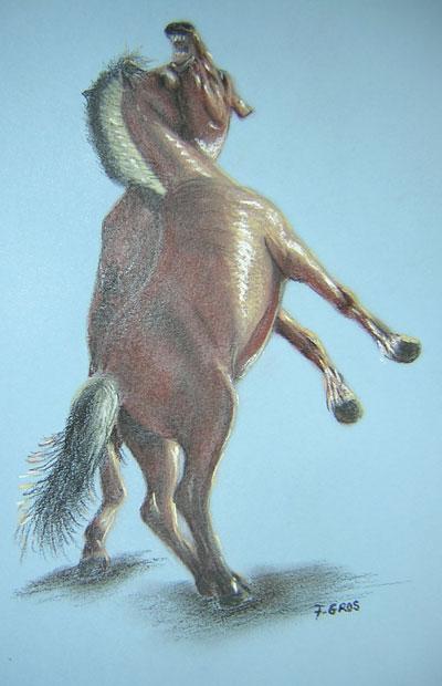 Photo du membre du cheval