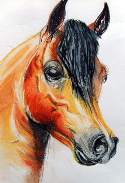 L'anatomie du cheval dans son ensemble - Hippologiefr