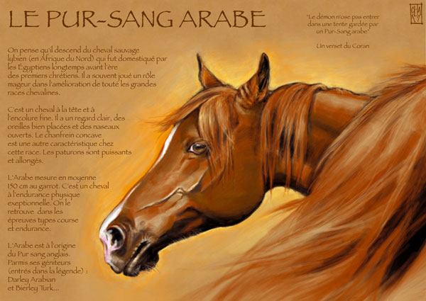 cheval arabe caracteristique