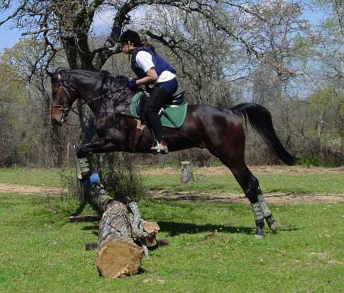 Le site cheval tests de loisirs le saut - Coloriage cheval qui saute ...